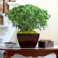 Indoor Plants That Don T Need Sun Perfect House Plants Womanwithin Blog