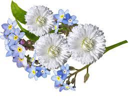 white and blue flowers white blue free photo on pixabay