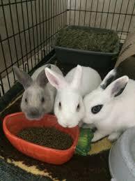 rabbit rescue luv a bun rabbit rescue