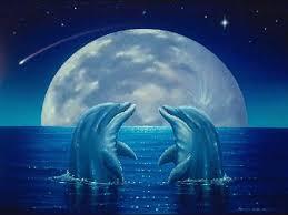 download cute dolphin imagesci wallpaper 1024x768 full hd