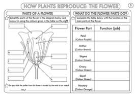 year 3 science plants topic worksheets by beckystoke teaching