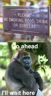 Gorilla Meme - sad gorilla meme by rogi46 memedroid