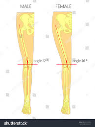 Anatomy Of The Knee Anatomy Of Foot Joints Images Learn Human Anatomy Image