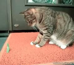 We Know Memes - praying mantis we know memes gif wifflegif