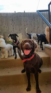 Canine Creature Comforts Media Gallery Canine Creature Comforts Dog Daycare Training