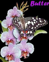 butterfly and orchid garden thames zealand