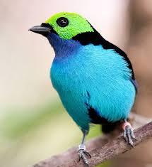 amazon jay bird black friday 72 best electric amazon images on pinterest nature photography