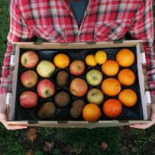 weekly fruit delivery box sustaining subscription bi weekly 24 99 delivery