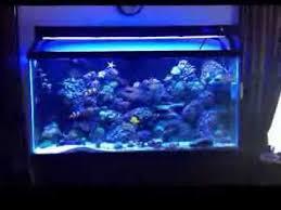 t5 aquarium light fixture reef tank ati t5 bulb upgrade comparison youtube