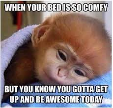 Saturday Morning Memes - get out there and be awesome saturday saturdaymorning daily