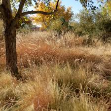 native plants albuquerque how to plant a meadow u2013 plants of the southwest