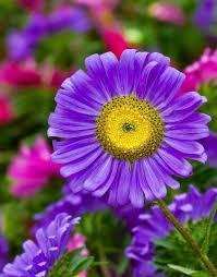 Nice Flowers 312 Best Carmelita Images On Pinterest Beautiful Flowers