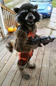 hands down arguably the best rocket raccoon costume i have ever
