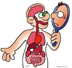 Cartoon Human Anatomy Cartoon Human Body Clipart 64