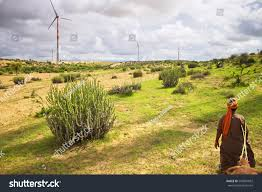 thar desert animals thar desert wind power plants local stock photo 540001852