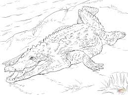 crocodile coloring page free printable crocodile coloring pages