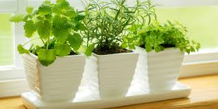 Inside Home Plants by Home Design The Jungle Queen House Plant Chic Plants Amp Tips On