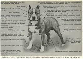 american pit bull terrier breed standard gotti bloodline page 2 pitbulls go pitbull dog forums