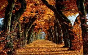 beautiful trees background 6981704