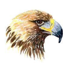 three birds of prey watercolors u2013 frits ahlefeldt laurvig logbook