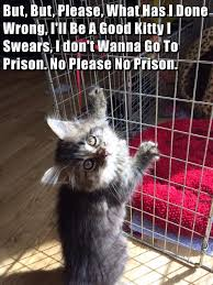 Meme Cheezburger - but but please http cheezburger com 9036692992 prison cat meme