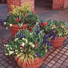 container garden ideas hgtv
