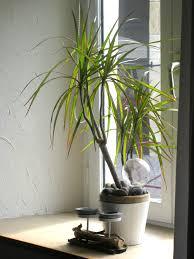 plante verte dans une chambre ma petit plante verte photo 11 16 3504403