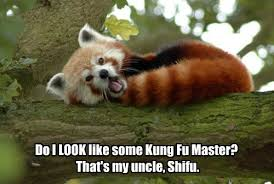 Inner Peace Meme - i was napping my way to inner peace animal capshunz funny