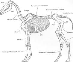 static plans for horse drawn hearse
