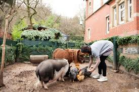 chickens miniature horse and pot belly pig all living together