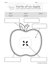 17 best images of apple graph worksheet apple parts worksheet