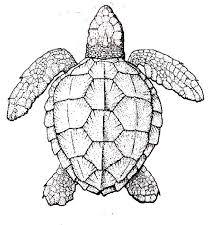 turtle coloring nuttin u0027 preschool teaching