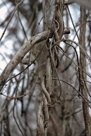 field biology in southeastern ohio let u0027s go climbing
