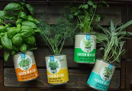 Indoor Herb Garden Kit Australia - garden in a can herb garden 4 pack indoor herb garden