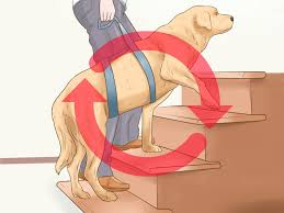 How To Train For Stair Climb by How To Train A Blind Dog To Handle The Stairs 11 Steps