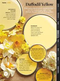 yellows paint colors pinterest daffodils yellow and yellow