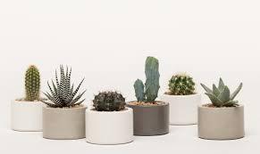 Concrete Succulent Planter Concrete Mini Planter Set Of 3 Iamthelab