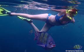 South Dakota snorkeling images Snorkeling thailand 39 s ko phi phi islands travel the world jpg