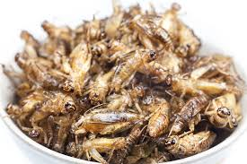 facts about crickets terro learning center