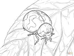 transverse lady beetle coloring page free printable coloring pages