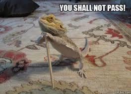 You Shall Not Pass Meme - you shall not pass meme 2015 viral viral videos