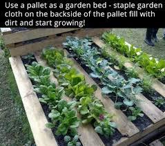 easy home veggie garden lauralaire com