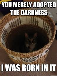 The Darkness Meme - you merely adopted the darkness i was born in it darkness cat