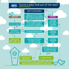 found a baby bird our handy guide can help rspca