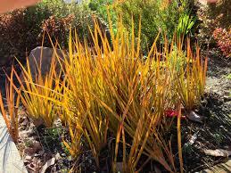native plant nursery santa cruz erosion control gardening tips for the santa cruz mountains