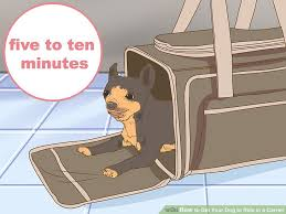 How To Get A Comfort Dog How To Get Your Dog To Ride In A Carrier 12 Steps With Pictures