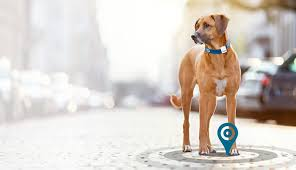 Gadgets For Pets 10 Smart Trackers For Pet Owners The Crowdfund Network