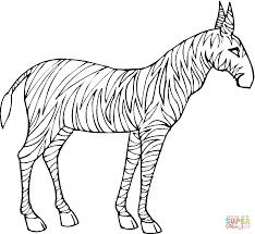 baby zebra coloring