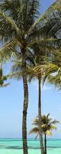 221 best bahamas images on pinterest nassau bahamas bahamas