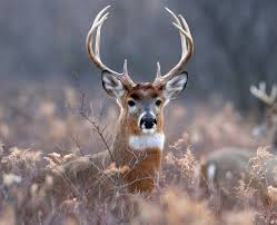 Deer Meme - create meme naive deer meme naive deer deer pictures meme